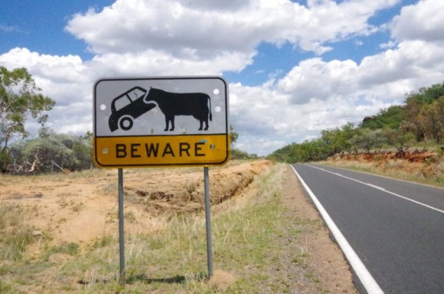 beware cattle road sign